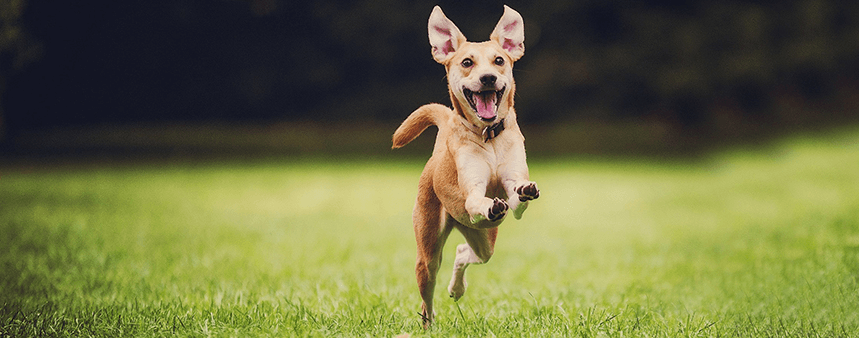11 Low Cost Products Your Dog Will Love for 2021