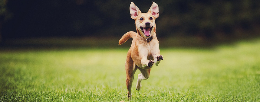 11 Low Cost Products Your Dog Will Love