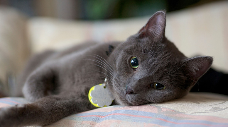 11 Low Cost Products Your Cat Will Love