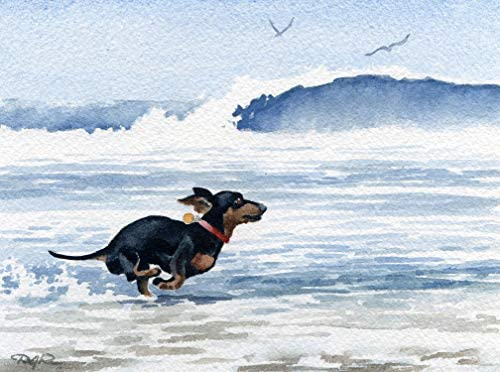 Dachshund Running at The Beach Watercolor Art Print by Artist DJ Rogers/Oversized