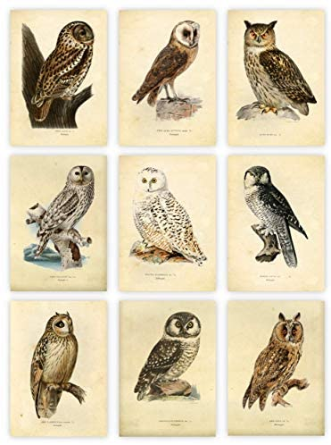Ink Inc Owl Bird Art Prints – Set of 9 5×7 – Unframed
